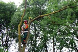 bomen-kappen-ede-2