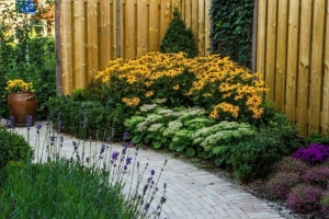 Tuin-aanplant-bloei