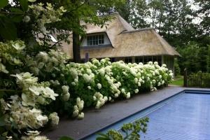 hortensias-in-een-tuin-in-beekbergen